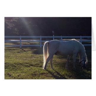 White Pony in Field Card