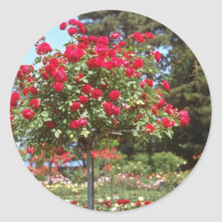 White Public Gardens, Geneva, Switzerland flowers Round Sticker