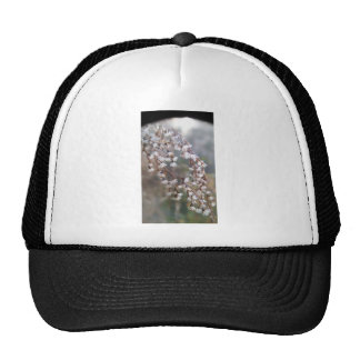 white puffs of flowers streaming downwards trucker hat