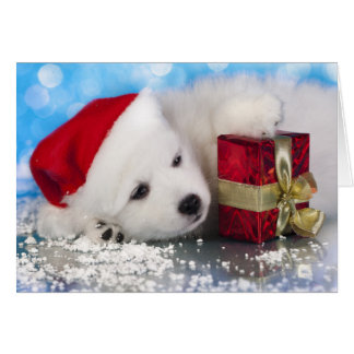 White Puppy With A Gift In Paws Card