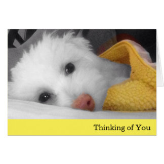 White Puppy, Yellow Blanket Thinking of You Card