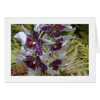 WHITE, PURPLE,BURGUNDY AND ORANGE ORCHIDS CARD