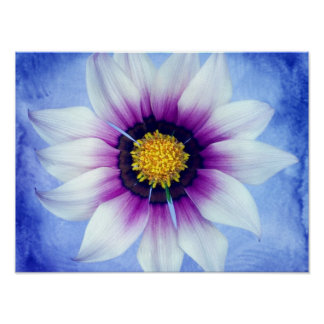 White & Purple Daisy on Blue Background Customized Poster