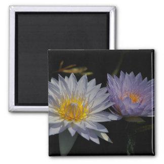 White & Purple Lotus Waterlilies magnet