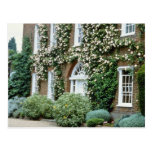 white Queen Anne House With Climbing Rose Cecile B Post Cards