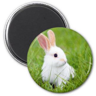 White Rabbit 6 Cm Round Magnet