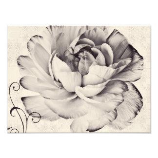 White Ranunculus Flower Black Background Photographic Print