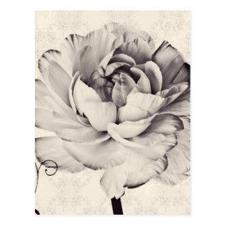 White Ranunculus Flower Black Background Postcard
