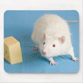 White rat and a piece of cheese mouse pads