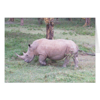 White Rhino Card