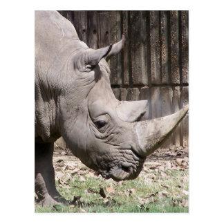white rhino postcard