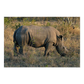 White Rhino Print