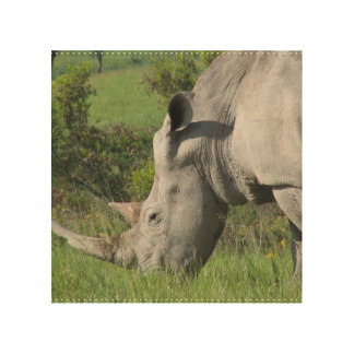 White Rhino Wood Prints