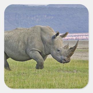 White Rhinoceros and distant Lesser Flamingos, Square Sticker