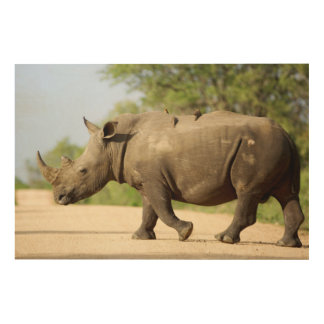 White Rhinoceros Crossing Road Wood Print