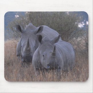 White Rhinos Mouse Pad