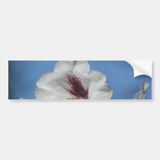 White Rhododendron with Burgundy Bumper Sticker