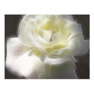 White Rose 2 Macro Angelic Postcard