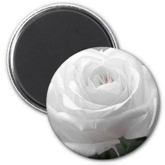 White Rose 6 Cm Round Magnet