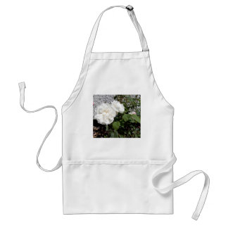 White rose against a pebble dashed wall standard apron