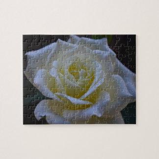 White rose at dusk jigsaw puzzle