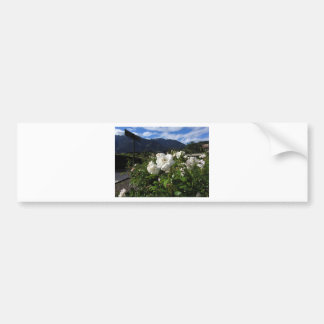 White rose blooms on a mountain background bumper stickers