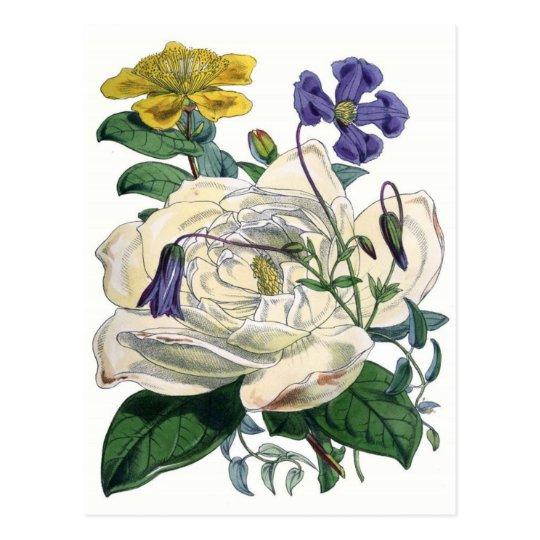 White Rose Botanical Illustration Postcard