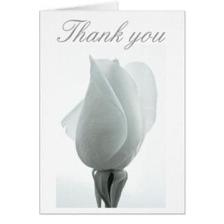 White rose bud ... Thank you card