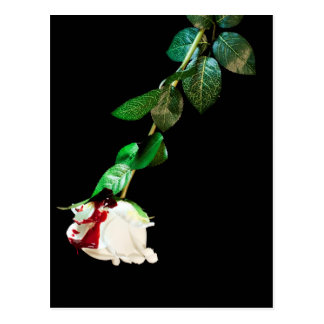 White rose covered with blood postcard