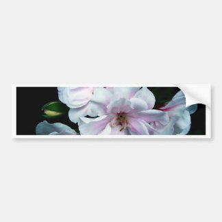 'White Rose' Geranium Bumper Sticker