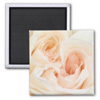 White Rose: Innocent and Pure Love Square Magnet