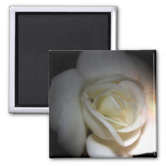 white rose square magnet