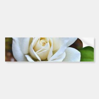 White Rose of Love Car Bumper Sticker