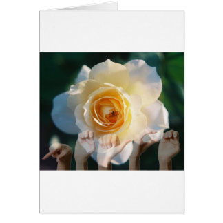 White Rose of  Peace - ASL Greeting Cards