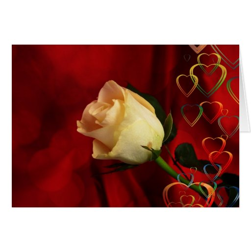 White rose on red background cards
