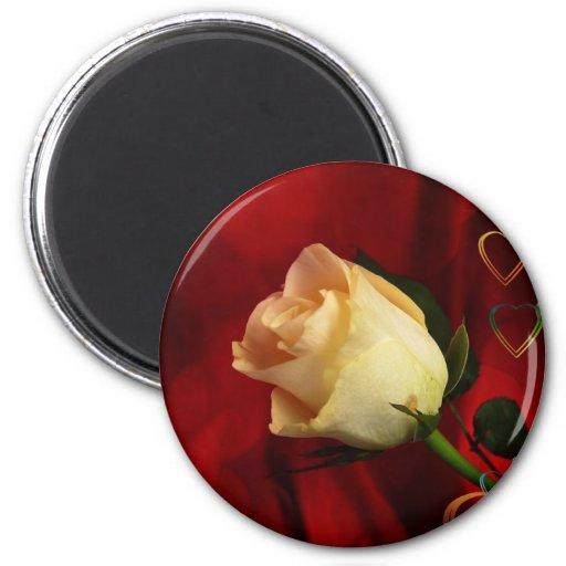 White rose on red background fridge magnet