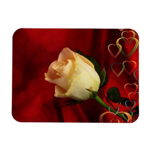 White rose on red background magnet