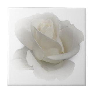 white rose on tile