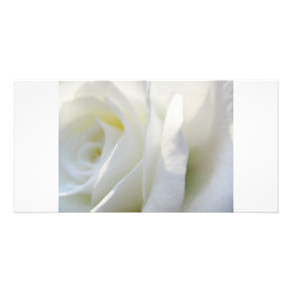 White Rose Picture Card