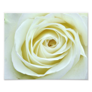 White Rose Photo Print
