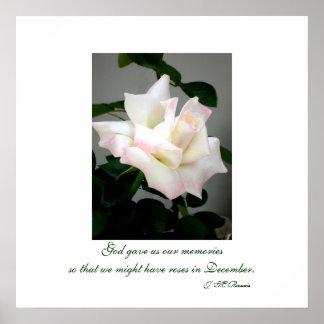 White Rose Poster Print