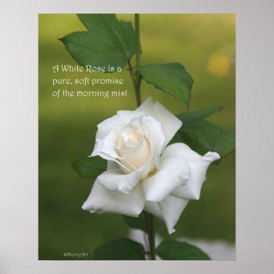 White Rose Poster: ROSE & PROSE 16x20 Poster