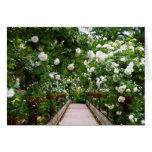 White rose walkway cards