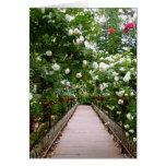 White rose walkway greeting card