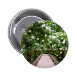 White rose walkway pinback button
