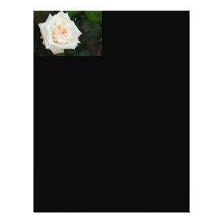 White Rose With Natural Garden Background 21.5 Cm X 28 Cm Flyer