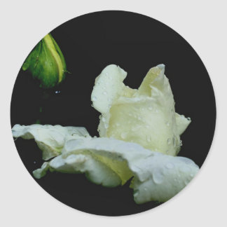 White Rosebud After Rain Stickers