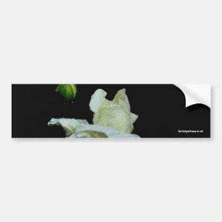 White Rosebud Flower Photo Bumper Sticker
