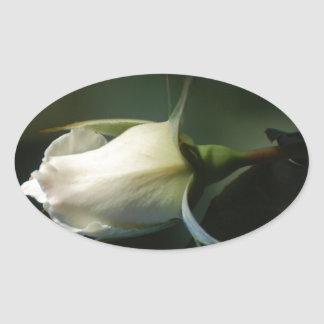 White Rosebud Oval Sticker