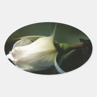 White Rosebud Oval Sticker